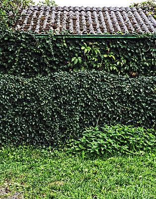 Overgrown gazebo  - p318m1170037 by Christoph Eberle