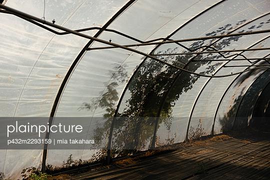 Pflanzenranken auf Gewächshaus - p432m2293159 von mia takahara