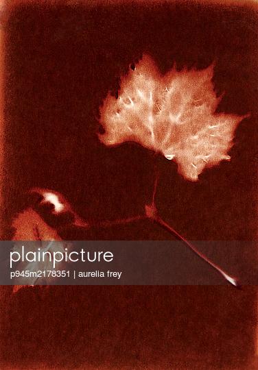 Röntgenbild, Blattadern - p945m2178351 von aurelia frey