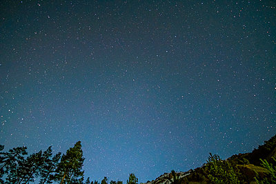 Low angle view of star field over trees - p1166m1545598 by Cavan Social