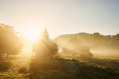 Pasture and trees against the light in the morning - p1312m2168090 by Axel Killian