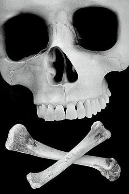 Skull - p450m1462419 by Hanka Steidle