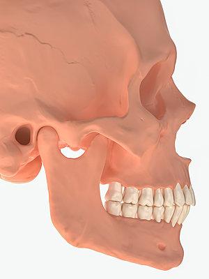 Skull - p1275m2135134 by cgimanufaktur