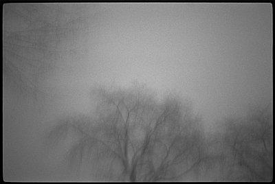 Dark, skeletal trees in thick fog - p3720289 by James Godman