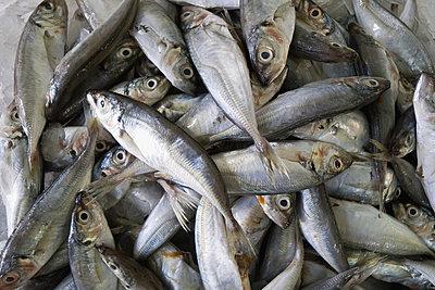 Mackerel at the fish market;Caldas da rainha portugal - p442m767697f by Heather Elton