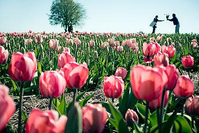 Tulip field - p880m1017160 by Claudia Below