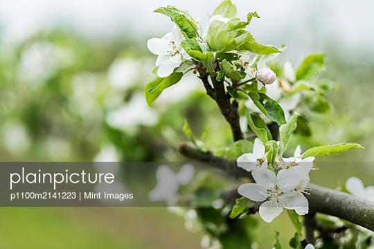 p1100m2141223 von Mint Images
