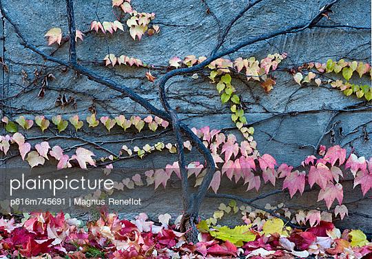 p816m745691 von Magnus Reneflot