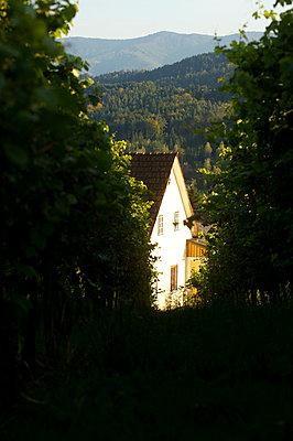 Haus in der Sonne - p1115m890228 von Nikolai Buroh