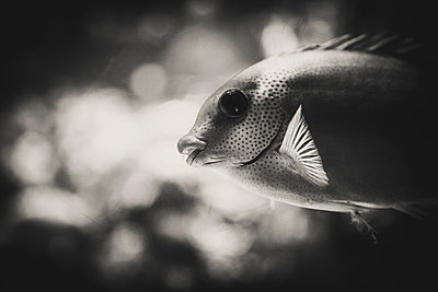 Little fish - p1150m1209154 by Elise Ortiou Campion