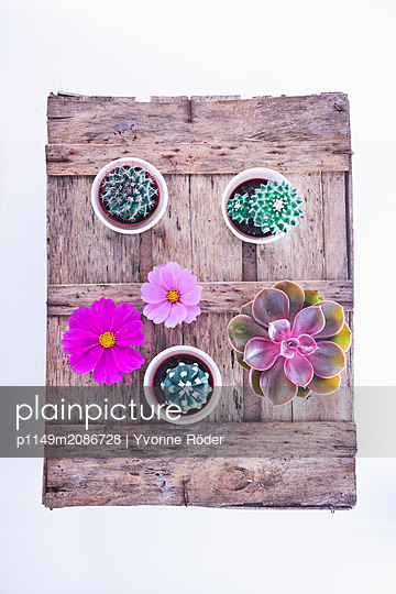 Cacti and flowers - p1149m2086728 by Yvonne Röder
