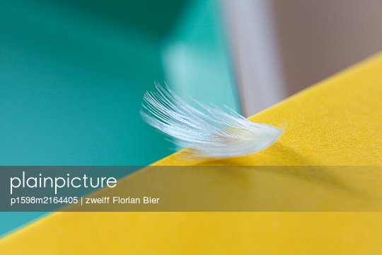 White feather on edge of the table - p1598m2164405 by zweiff Florian Bier