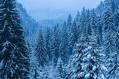 Winter landscapes of Carpathian Mountains near Brasov, Brasov County, Romania - p871m2111526 by Matthew Williams-Ellis