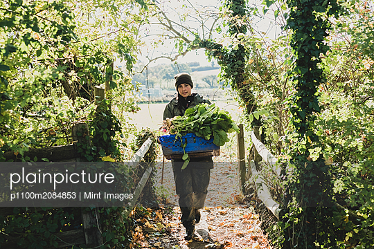 Woman walking towards camera, carrying blue crate with freshly harvested vegetables. - p1100m2084853 by Mint Images