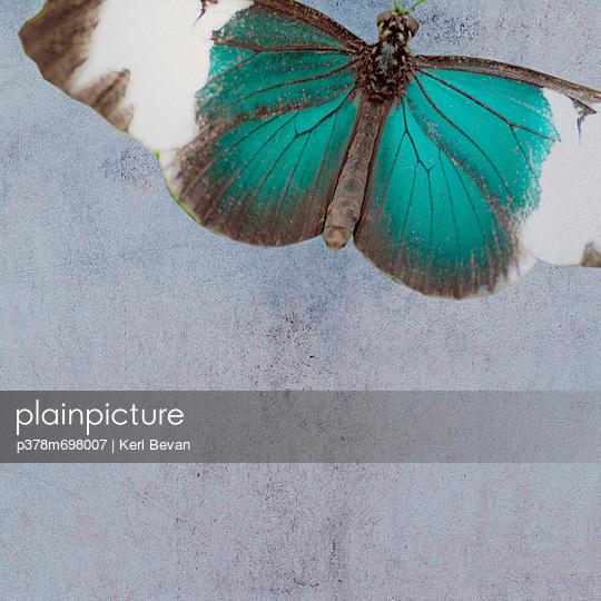 Blue butterfly - p378m698007 by Keri Bevan