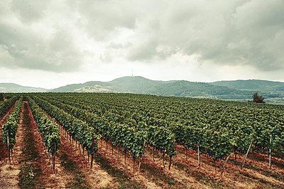 Weinbaugebiet - p851m1362574 von Lohfink