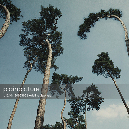 Pines - p1240m2063366 by Adeline Spengler