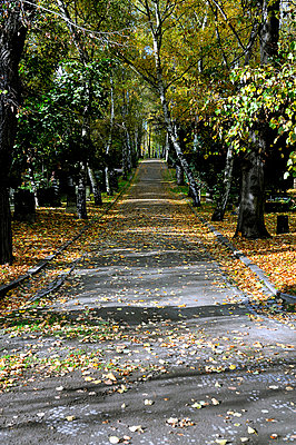 Pathway through a graveyard in Berlin - p1047m789476 by Sally Mundy