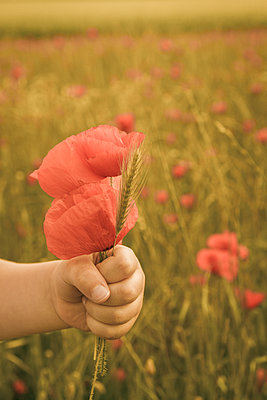 Oh ! Coquelicots - p1402m1538028 by Jerome Paressant
