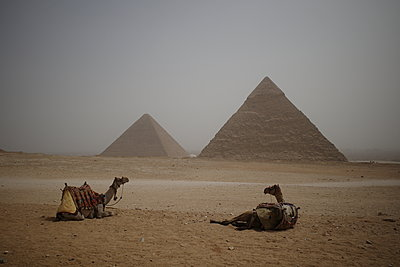 Two camels lying in front of Gizeh Pyramids in Egypt - p1610m2181511 by myriam tirler