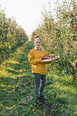 Young woman holding crate with apples in orchard - p300m1206002 by Kniel Synnatzschke