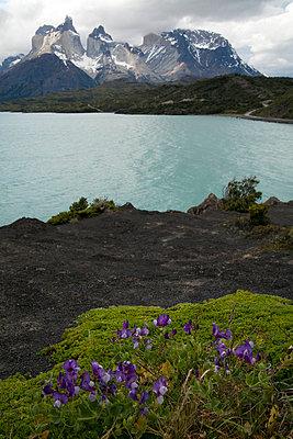 Torres del Paine - p8740063 von Lisa Franz