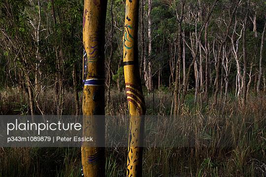 p343m1089879 von Peter Essick photography