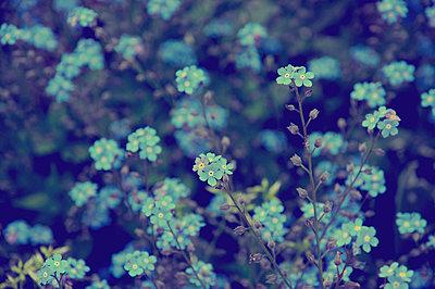 Flowers - p1153m951233 by Michel Palourdiau