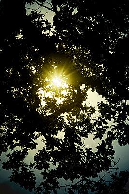 Sun Glare Through Foliage - p1248m1083634 by miguel sobreira