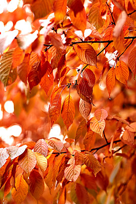 Autumn color - p1239m2272780 by Krista Keltanen