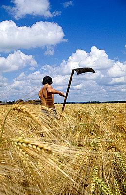 Harvest - p2683636 by Stephan Nau