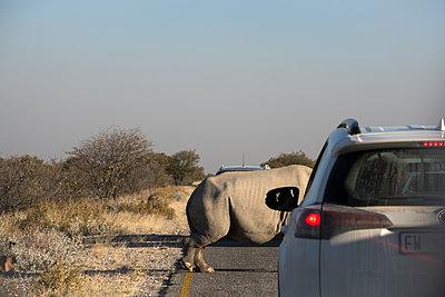 Rhinozeros überquert die Straße - p1486m2100444 von LUXart