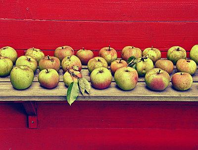 geerntete Äpfel - p979m1219691 von Andreas Grigoleit
