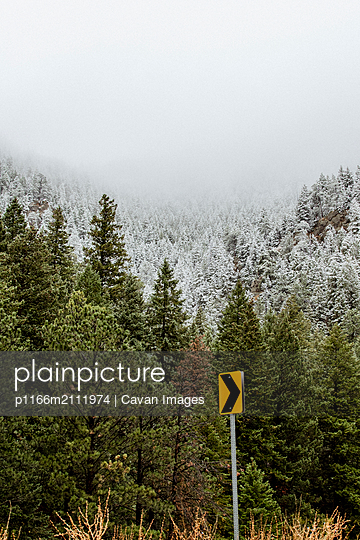 Arrow symbol against pine trees in forest during foggy weather - p1166m2111974 by Cavan Images
