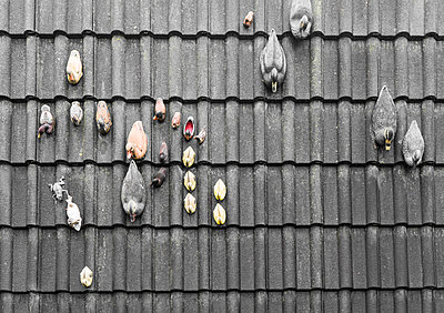 Roof tiles and plastic ducks - p075m2071214 by Lukasz Chrobok