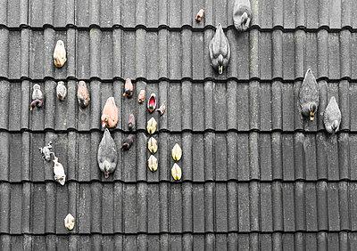 Dachziegel mit Plastikenten - p075m2071214 von Lukasz Chrobok