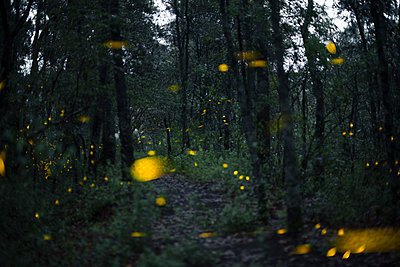 Fireflies in Santa Clara, Nanacamilpa, Tlaxcala, Mexico - p343m1520781 by Marcos Ferro