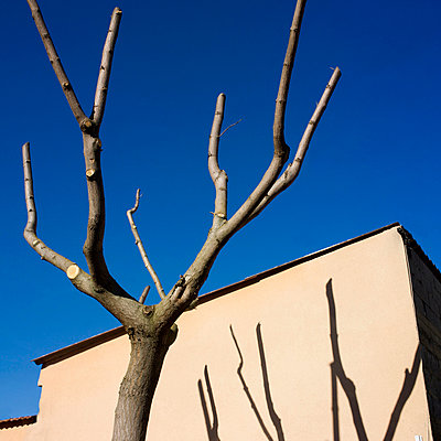 Shadow of bare tree on a wall - p813m903913 by B.Jaubert