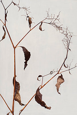 Dead leaves - p971m947633 by Reilika Landen
