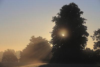 Morgens - p1016m934780 von Jochen Knobloch
