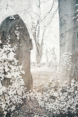 Tombstone overgrown by ivy, infrared photography - p1280m2244768 by Dave Wall