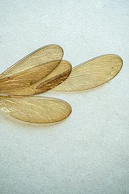 Dragonfly wings - p971m2263948 by Reilika Landen