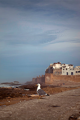 Seagull on the fortress wall - p382m1194970 by Anna Matzen