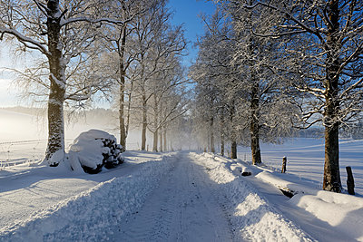 Germany, Bavaria, Geretsried, snowy forest track - p300m1568232 by Hans Lippert