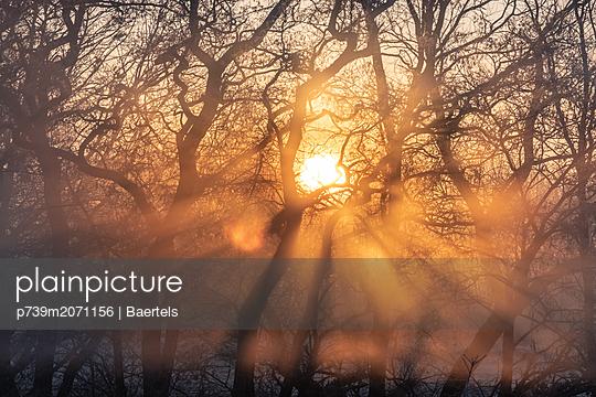 Sonnenaufgang im Frühnebel - p739m2071156 von Baertels