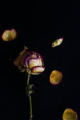 Blume - p947m1020634 von Cristopher Civitillo