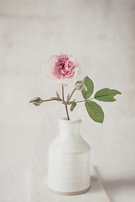 Rose in Stone bottle - p1470m1539165 by julie davenport