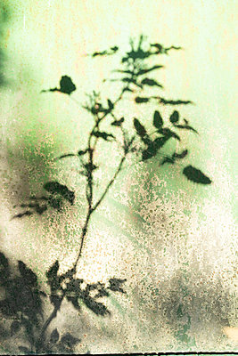 Shadow of plants - p1422m1573964 by Vivian Rutsch