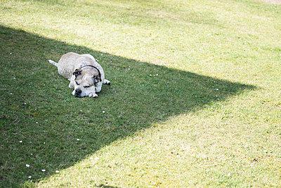 Hund im Schatten - p403m2004836 von Helge Sauber
