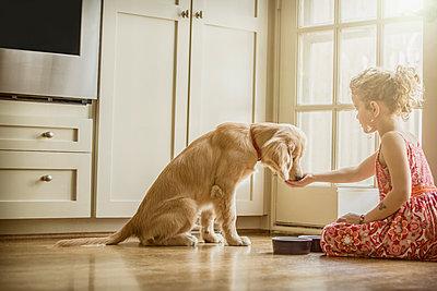 Caucasian girl sitting on kitchen floor feeding dog - p555m1305213 by Terry Vine